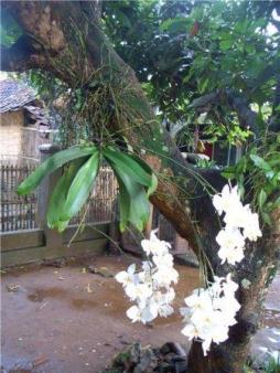Орхідеї фото в природі фото 222-641