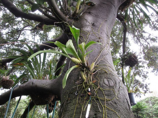 Орхідеї фото в природі фото 222-774